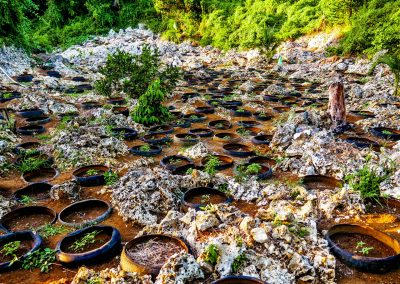 Ganja field with small plants inside car tires in mountains near Negril, Jamaica