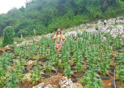Rasta girl showing peace in ganja field near Negril, Jamaica