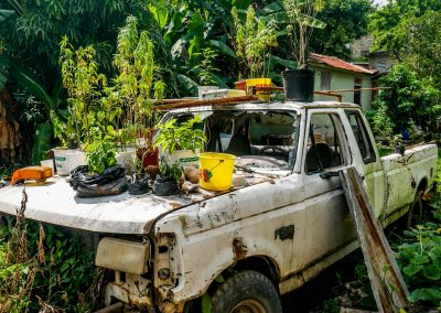 Kingston - Old Car with Ganja Plants
