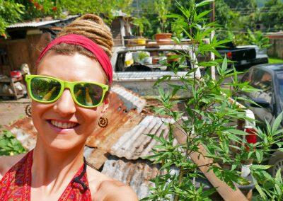 Kingston - Rastafari Ganja Plant