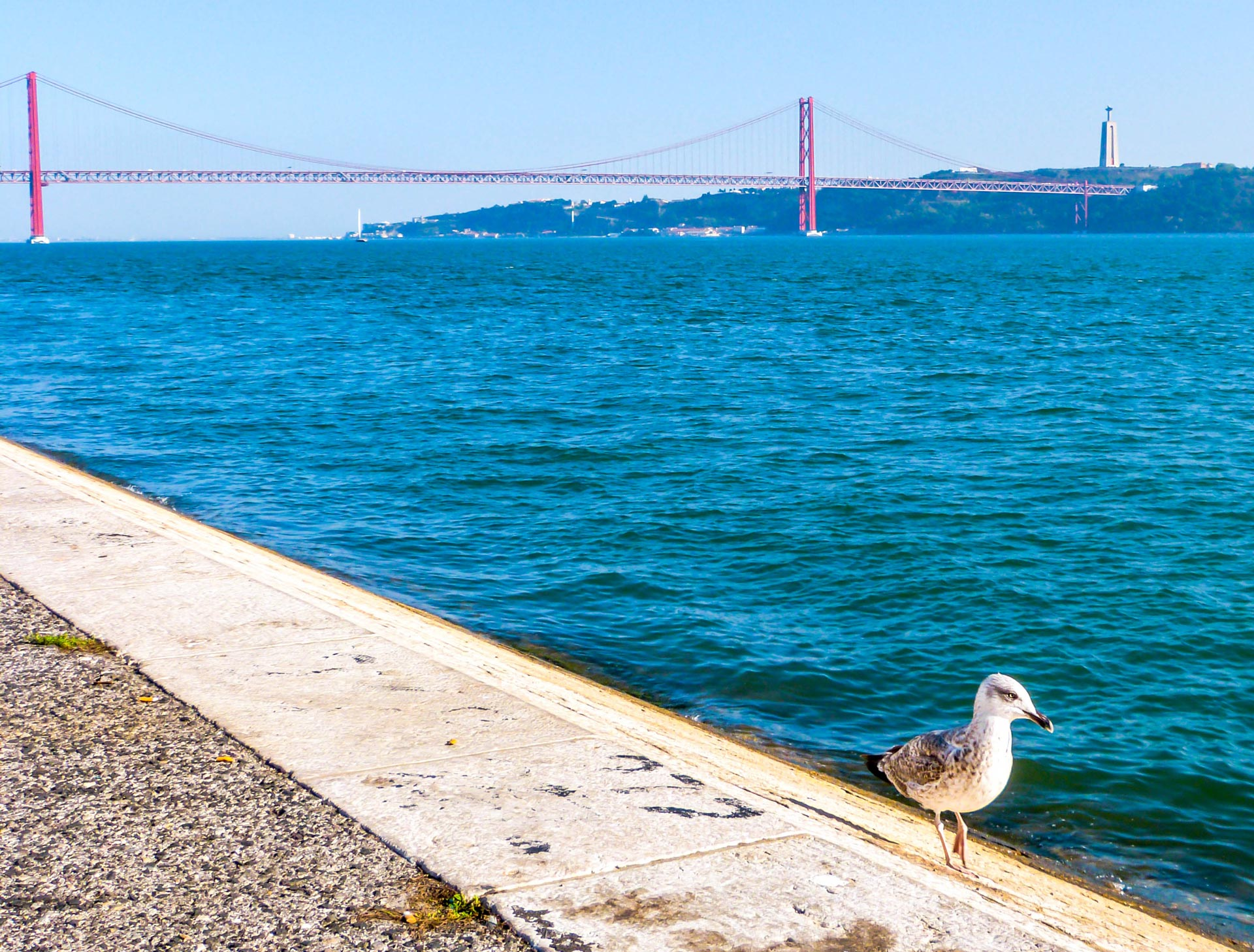 Seagull walking next to Tagus with Ponte 25 de Abril and Cristo Redentor in background in Lisbon