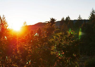 Northern California - Weed Farm Sunset