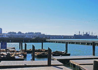 Sea lions at Pier 39 in the San Francisco Bay, CA