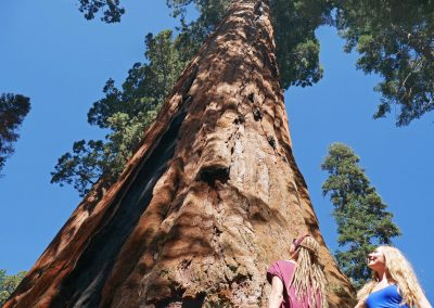 Sisters looking up giant tree in Sequoia National Park