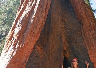 Rasta girl standing in giant tree in Sequoia National Park