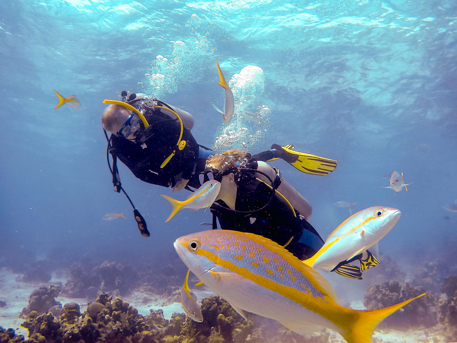 Scuba divers and fish in Bay of Pigs, Cuba