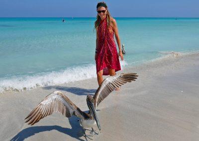 Varadero – Meeting Pelicans at the Beach