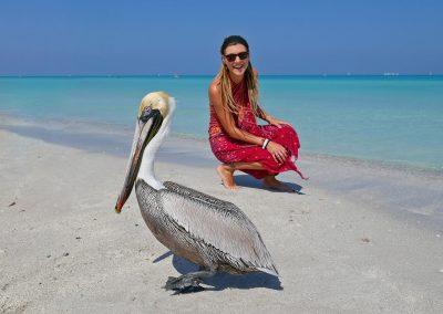 Varadero – Meeting a Pelican at the Beach