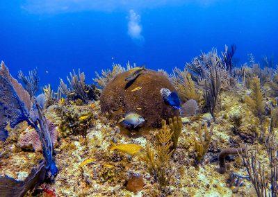 Fish at coral reef in Varadero, Cuba