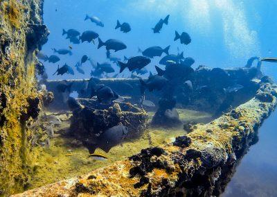 Many fish next to wreck in Varadero, Cuba