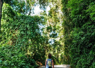 Rio de Janeiro - A Green Walk Up