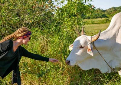 Imbituba - Meeting a Cow