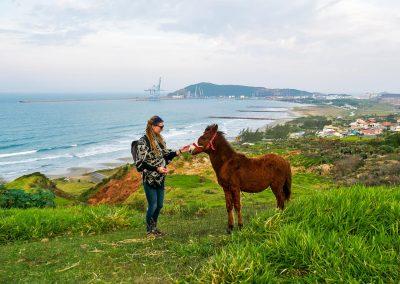 Imbituba - Meeting a Young Horse
