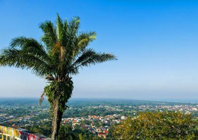 Peruíbe - Palm Tree at Mirante da Torre